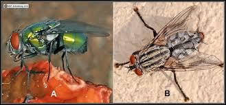 Flies In Backyard The Amazing Fungi