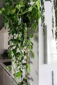 Best Low Light Plants Emejing Hardy Indoor Plants Ideas Interior Design Ideas