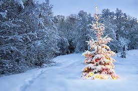 winter white christmas snow beautiful trees nature pine lights