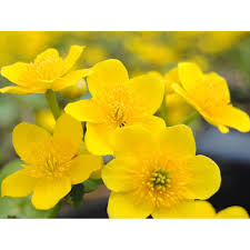 Kies Garten Gelb Gelb Brunnen U0026 Teiche Und Weitere Gartenausstattung Günstig