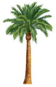 clipart of palm tree free wikiclipart