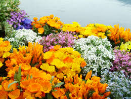 Image Of Spring Flowers by 158 Best Spring Beauty Images On Pinterest Spring Nature And