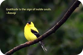 Banister Meaning In Hindi Bird Meaning Of Finch