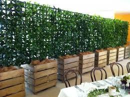 star jasmine on trellis ponad 1000 obrazów na temat planter boxes na pintereście patio