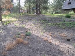 plant care blackfoot native plants