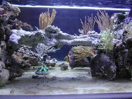 Aquascape Reef My 500 Gallon System Last 13 Years To Now Build Aquascaping