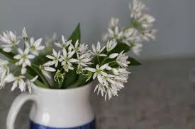 Plants Of Season 4 Joanna by Plant Identification Zeb Bakes