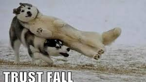 Best Animal Memes - to laugh these are the best animal memes on the internet