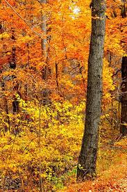 Why Fall Is The Best Season by 34 Best Hello Fall Colors Images On Pinterest Autumn Leaves