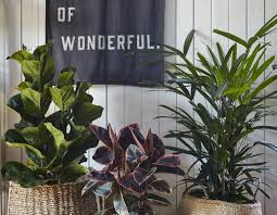 indoor plants that need little light plant indoor plants suitable for bathrooms small house plants