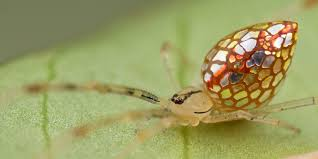 these spiders look like they u0027re covered in mirrors bored panda