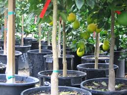 planting pots for sale nursery plant pots explained how nursery pot sizes are determined