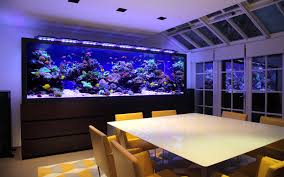 Fish Tank Dog House Fish Tank Magnificent Aquarium Designs For - Home aquarium designs