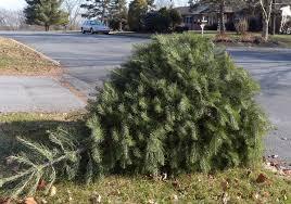 christmas tree pick up christmas 2017 and tree