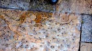 How To Remove Lichen From Patio Using Our Patio Black Spot Remover For Natural Stone On Indian