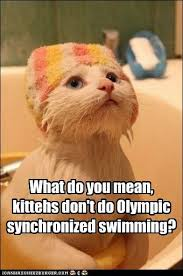 Synchronized Swimming Meme - what do you mean kittehs don t do olympic synchronized swimming