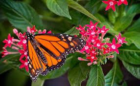Butterfly Free Flight House