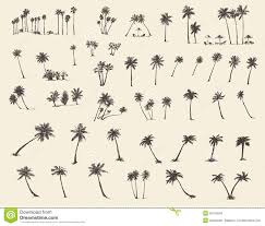 vector illustrations silhouette palm trees sketch stock vector
