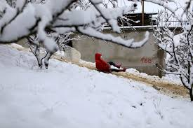 in pictures blankets of snow across north africa al arabiya english