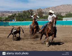 high school in united states two cowboys at a high school rodeo in the team roping event