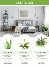 best bedroom plants the best houseplants for every room proflowers