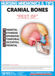 Fundamental Anatomy And Physiology Anatomy And Physiology Nursing Mnemonics U0026 Tips