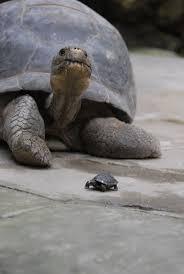 Tortoise Home Decor 276 Best Turtles Tortoises Images On Pinterest Animals