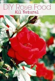all natural flower food epsom salt garden uses best tips video instructions epsom salt