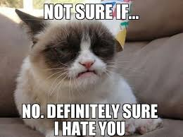Frown Cat Meme - 21 grumpy cat memes you can relate to every monday of your life