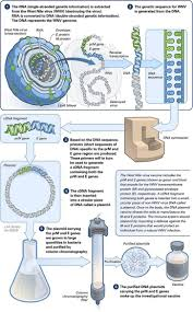114 best genetics images on pinterest ap biology teaching