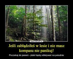 le si e de jeśli zabłądziłeś w lesie i nie masz kompasu nie panikuj