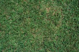 Green Turf Rug How To Take Care Of Carpet Grass Hunker
