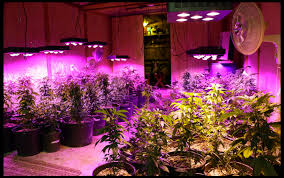 top led grow lights top 8 best indoor led grow light review guideline 2016 best led
