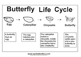 butterfly life cycle sequencing worksheet