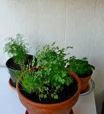 plante aromatique cuisine réaliser un mini jardin d intérieur en cultivant des plantes