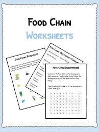 cell facts information u0026 worksheet animals human u0026 plants