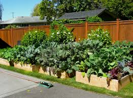 excellent bright and modern backyard gardens small vegetable