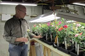 a visit with knock out roses u0027 william radler the hortiholic