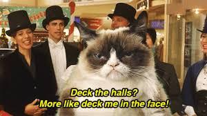 Angry Cat Meme Generator - angry cat meme generator find make share gfycat gifs