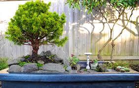 a look into the future miniature garden trees the mini garden