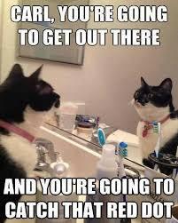 Random Cat Meme - random memes
