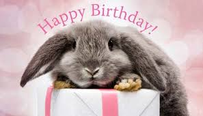 rabbit birthday hurray bunny s birthday a lovely day you are being
