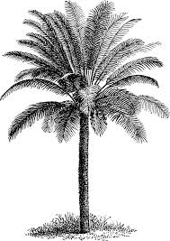 i think it u0027s the frond overlay that gives the palm depth so it