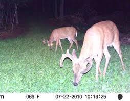 39 best food plots deer feed images on pinterest bass pro shop