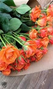 best 25 orange roses ideas on pinterest roses orange flower