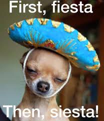 Dog Lady Meme - happy cinco de mayo first fiesta then siesta dogs pinterest