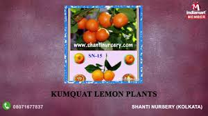 curry tree herb murraya koenigii passion fruit scientific name all the best fruit in 2017