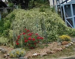 Bush Rock Garden Edging by Landscape Design Forum Slope Edging Help Garden Org