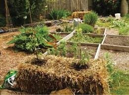 hay bale gardening center for excellence in disabilities