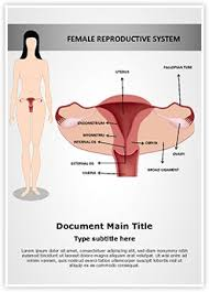 Anatomy Of The Female Reproductive System Pictures Female Reproductive System Ms Word Template Is One Of The Best Ms